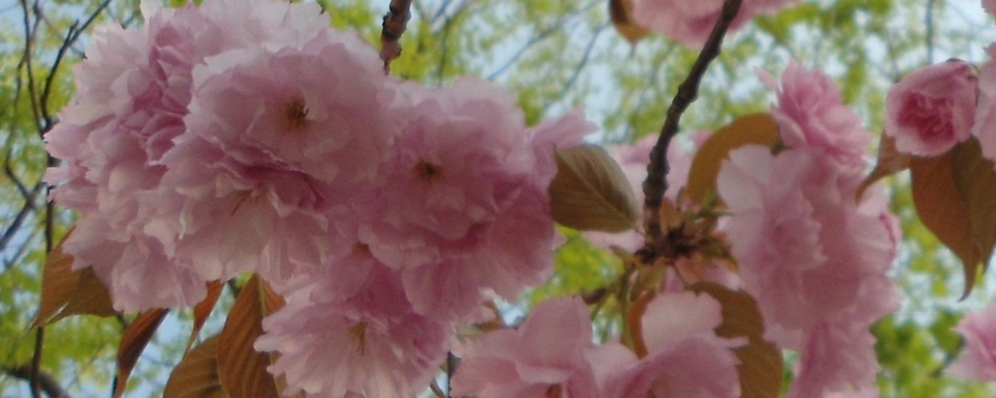 Spring in Beijing – Best Bloomin' Season of the Year