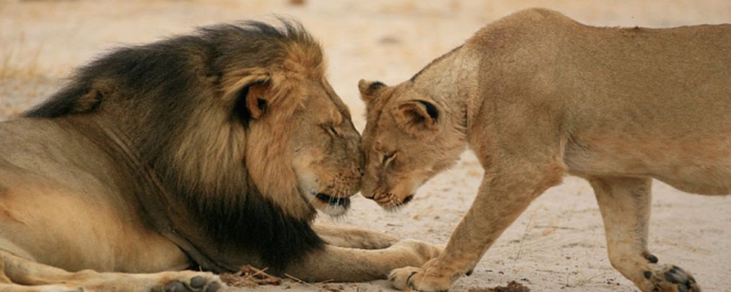 Use Your Voice on Social Media: Not Only for Cecil the Lion